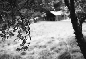 Merzbarn by Julie Dawn Dennis