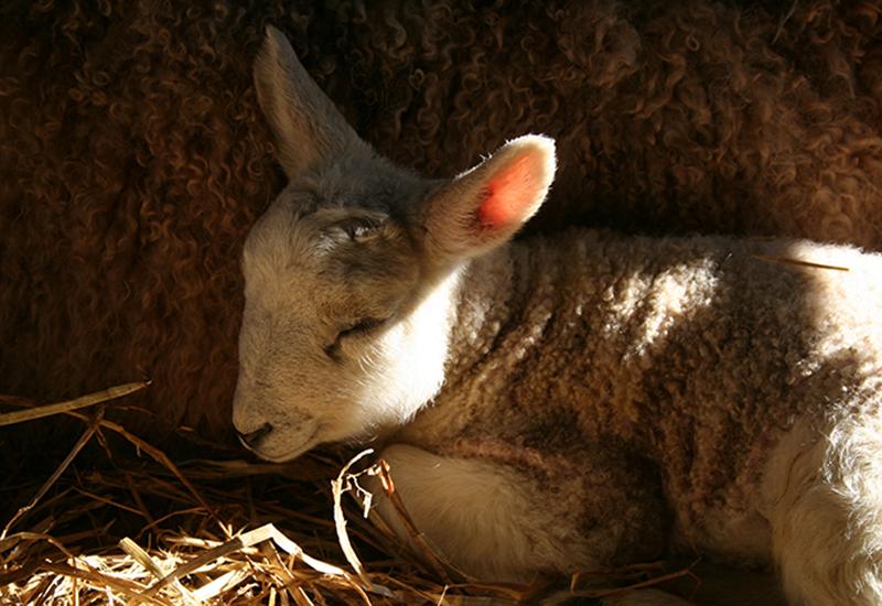 Newborn by Julie Dawn Dennis