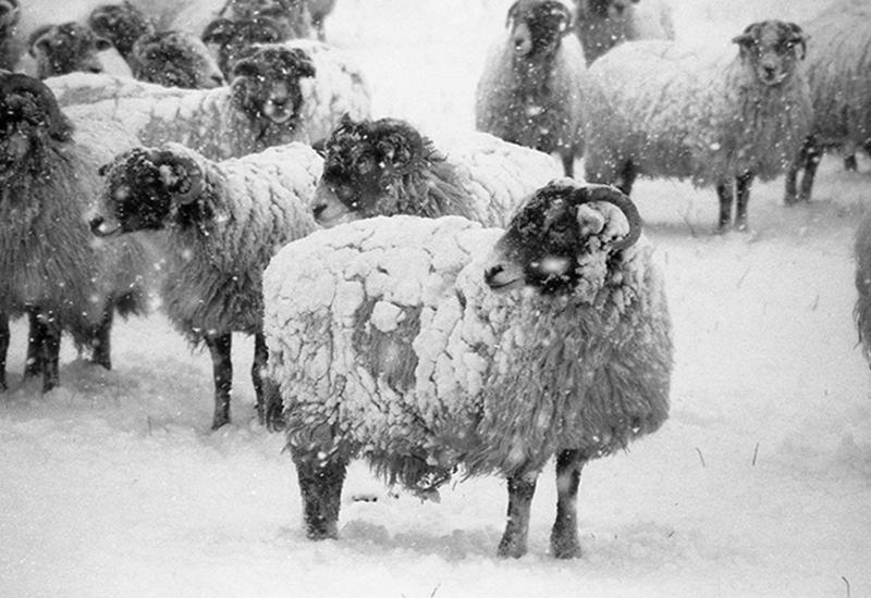 Winter by Julie Dawn Dennis