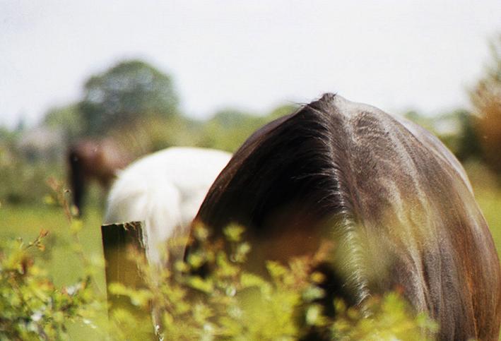 horse #2 bu Julie Dawn Dennis