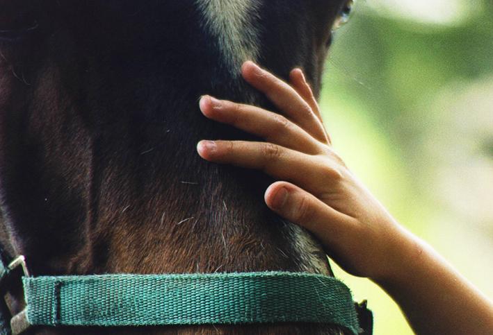 horses in field by julie dawn dennis